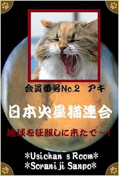 日本火星猫連合 会員番号No.2 アキちゃん - コピー.jpg