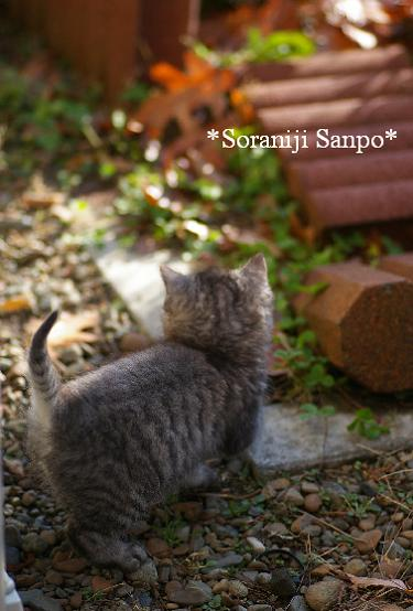 soraniji sanpo081118-2 - コピー.jpg