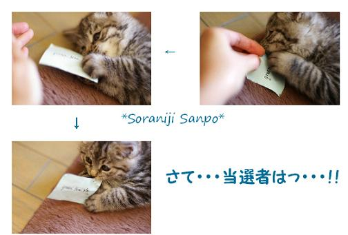 soraniji sanpo081201-6 - コピー.jpg